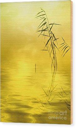 Sunlight Wood Print by Veikko Suikkanen