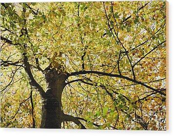 Sunlit Autumn Tree Wood Print by Natalie Kinnear