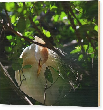 Sunlit Egret Wood Print by Laura Fasulo