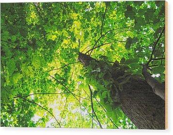 Sunlit Leaves Wood Print by Lars Lentz