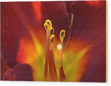 Wood Print featuring the photograph Sunlit Lily by David Porteus
