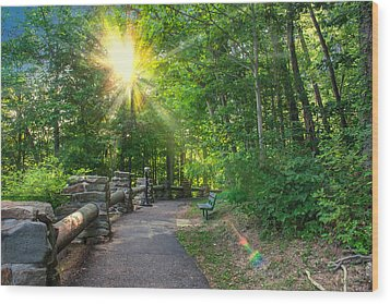 Sunlit Path Wood Print by Mary Almond