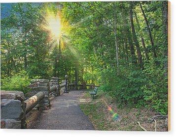 Sunlit Path Wood Print