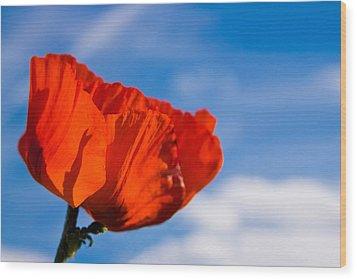 Sunlit Poppy Wood Print by Adam Romanowicz