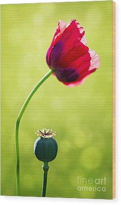 Sunlit Poppy Wood Print by Natalie Kinnear