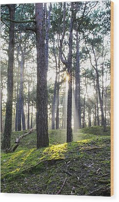 Sunlit Trees Wood Print by Spikey Mouse Photography