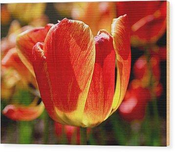 Sunlit Tulips Wood Print by Rona Black