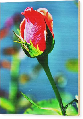 Sunlite Rose Bud Wood Print by Judy Palkimas