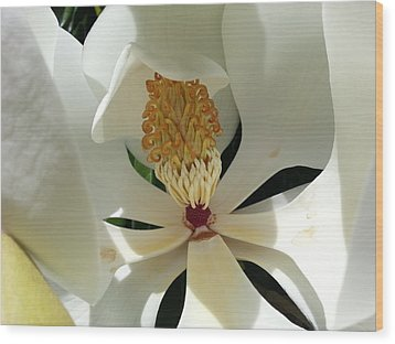 Sunny And Shy Magnolia Wood Print