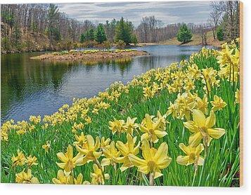 Sunny Daffodil Wood Print by Bill Wakeley