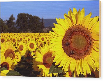 Sunny Day II Wood Print by Meaghan Troup
