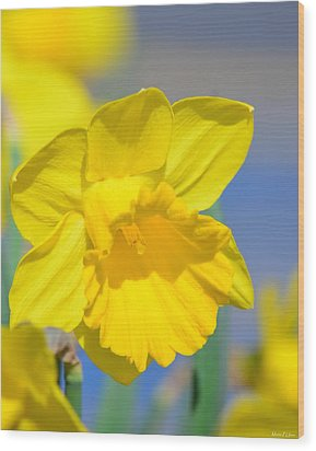 Sunny Days Of The Daffodil Wood Print by Maria Urso