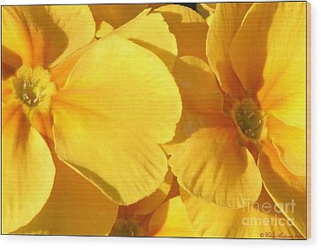 Sunny Disposition Wood Print by Chris Anderson