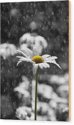 Sunny Disposition Despite Showers Wood Print by Lisa Knechtel
