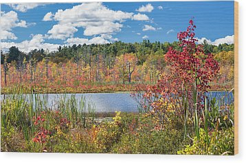 Sunny Fall Day Wood Print by Bill Wakeley