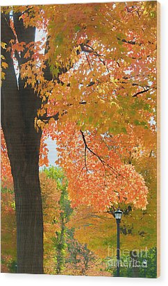 Sunny Fall Day By David Lawrence Wood Print