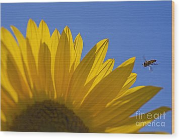 Sunny Fly By Wood Print by Nick  Boren
