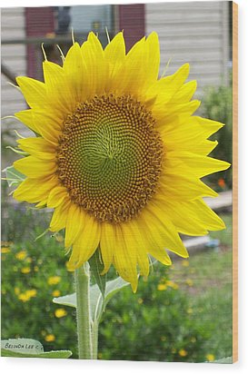 Wood Print featuring the photograph Bright Sunflower Happiness by Belinda Lee