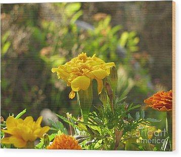 Sunny Marigold Wood Print