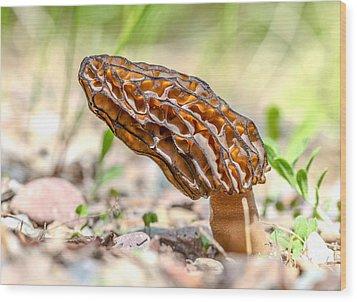 Sunny Morel Wood Print by Aaron Aldrich