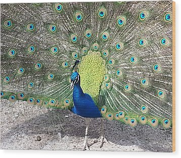 Wood Print featuring the photograph Sunny Peancock by Caryl J Bohn