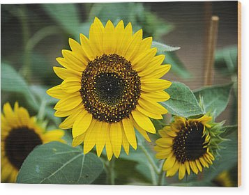 Wood Print featuring the photograph Sunny Smile Sunflower by Phil Abrams