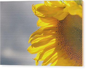 Wood Print featuring the photograph Sunny Sunflower by Cheryl Baxter