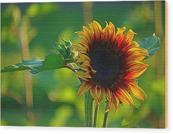 Sunny Sunflower Wood Print by Denise Darby