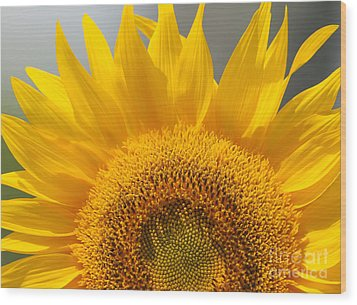 Wood Print featuring the photograph Sunny Sunflower by Olivia Hardwicke