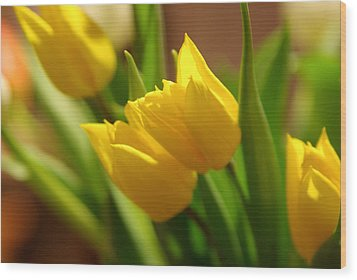 Wood Print featuring the photograph Sunny Tulips by Erin Kohlenberg