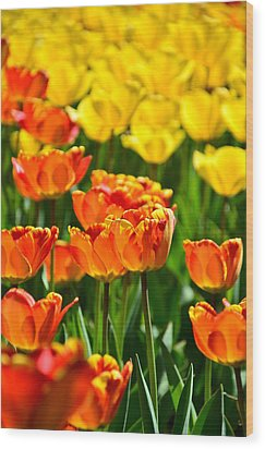 Sunny Tulips Wood Print by Gynt