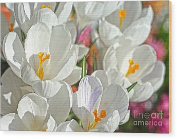 Sunny White Flowers Wood Print by Nur Roy