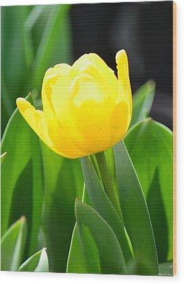 Sunny Yellow Tulip Wood Print by Maria Urso