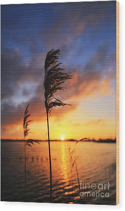 Sunrise @ The Lake Wood Print by LHJB Photography
