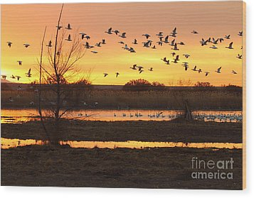 Wood Print featuring the photograph Sunrise And Geese by Ruth Jolly