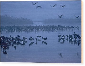Sunrise Over The Hula Valley Israel 4 Wood Print