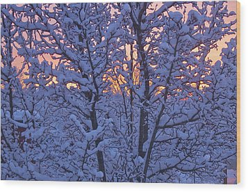 Sunrise Branches Wood Print