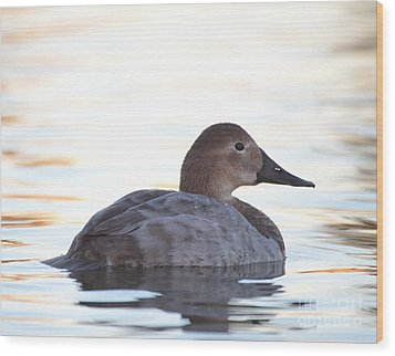 Sunrise Canvasback Wood Print