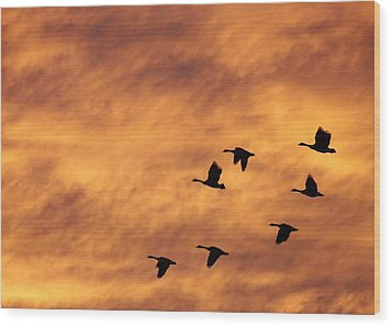 Sunrise Flight 2 Wood Print by Diane Alexander