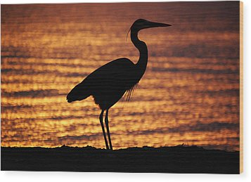 Wood Print featuring the photograph Sunrise Heron by Leticia Latocki