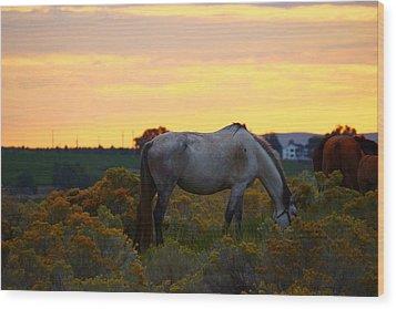 Wood Print featuring the photograph Sunrise Horse by Lynn Hopwood