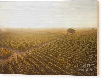 Sunrise Over The Vineyard Wood Print by Diane Diederich