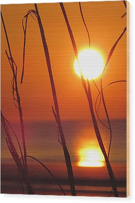 Wood Print featuring the photograph Sunrise Plant by Nikki McInnes