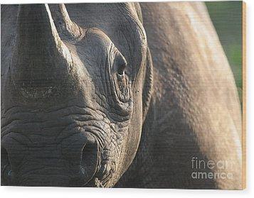 Sunrise Rhino Wood Print by Alison Kennedy-Benson