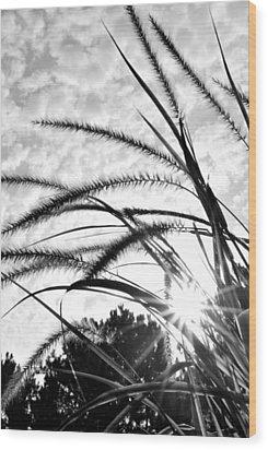 Wood Print featuring the photograph Sunrise Sunburst by Kelly Nowak