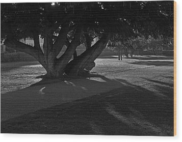Wood Print featuring the photograph Sunrise Through Old Tree by Inge Riis McDonald