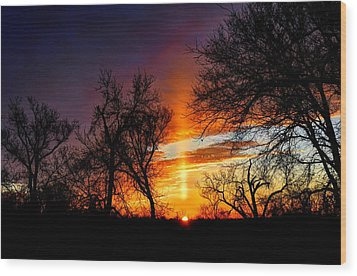 Sunrise Through The Cottonwoods Wood Print by Jean Hutchison