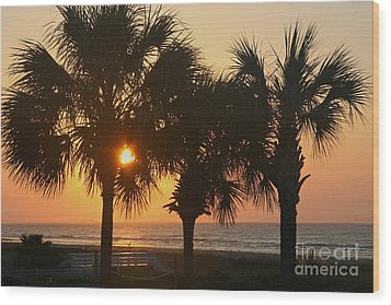 Sunrise Through The Palms Wood Print by Kevin McCarthy