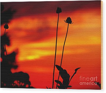 Sunset 365 20 Wood Print by Tina M Wenger