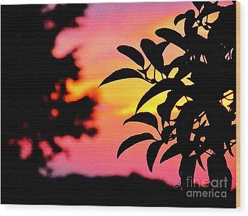 Sunset 365 61 Wood Print by Tina M Wenger
